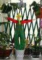 Кукла Тильда «Садовник»